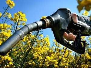 Сырье для получения биодизеля